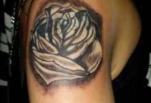 Rose - CoverUp